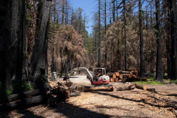 El parque estatal Big Basin Redwoods. Foto Gabrielle Canon.The Guardian