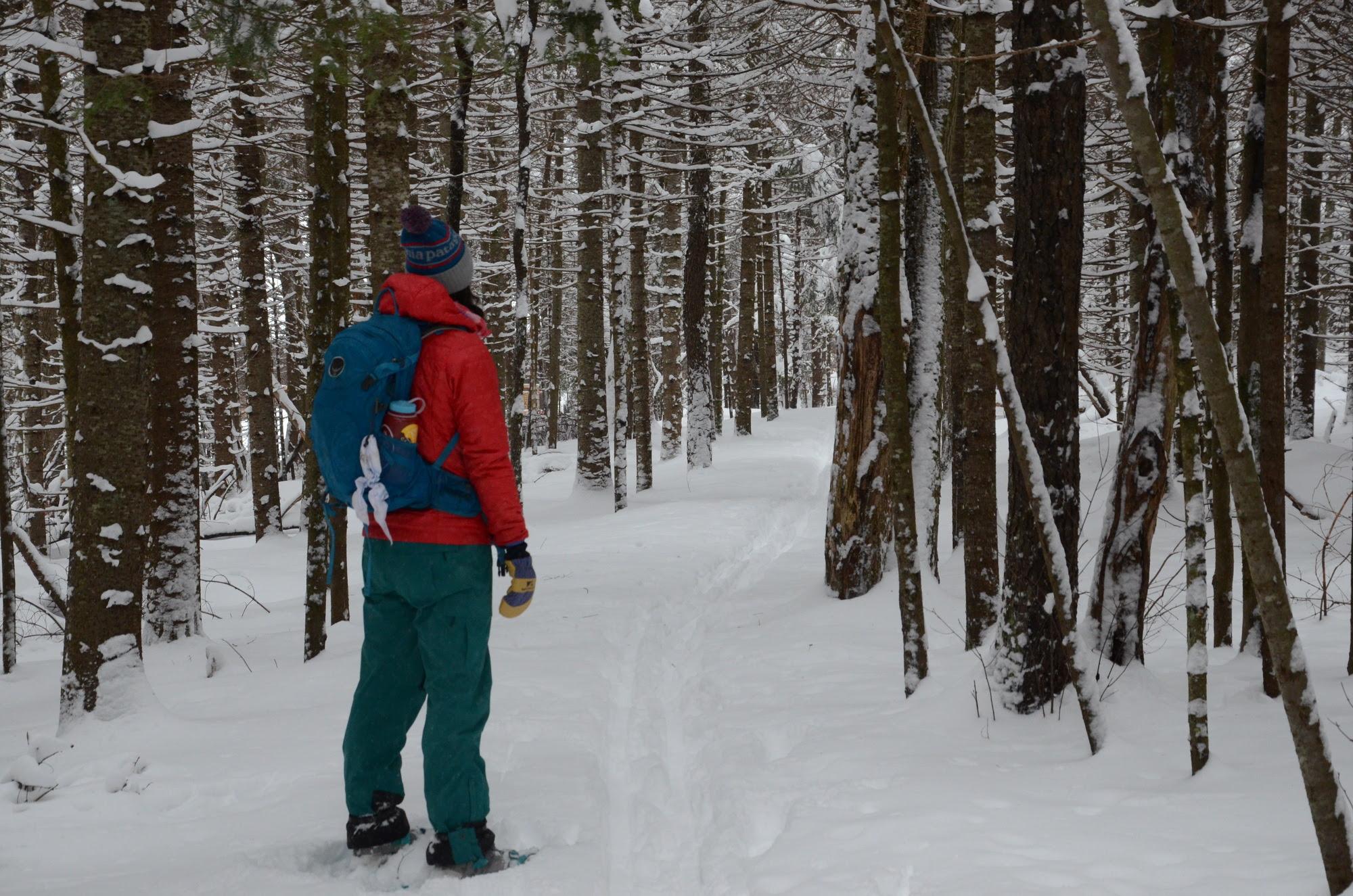 Snowshoer on snowy trail