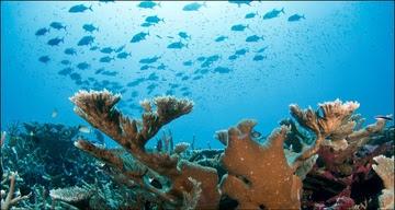 Coral Reef Conservation Program Strategic Plan