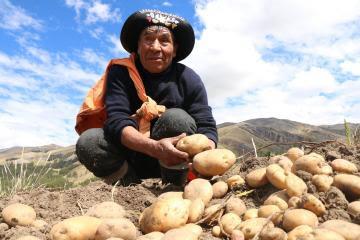 Huancavelica sembrará 3.319 hectáreas de cultivos orgánicos adicionales en la campaña agrícola 2021/2022