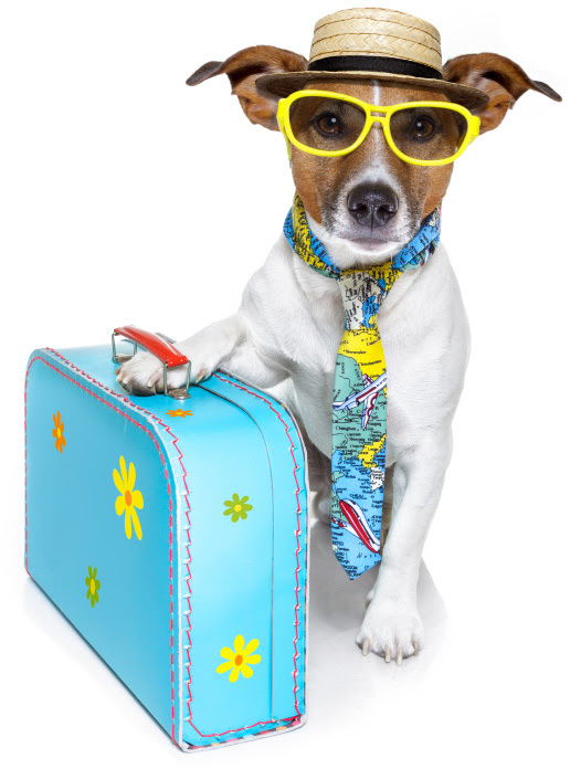 The pet suitcase: 12 Items to pack for your dog – SheKnows