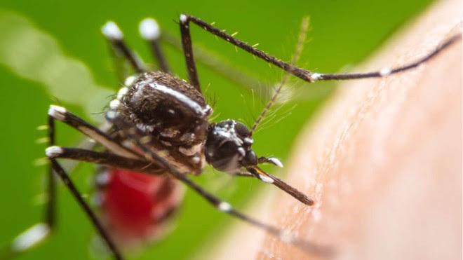 Công ty chị em của Google sắp thả 20 triệu con muỗi ra càn quét nước Mỹ - Ảnh 3.