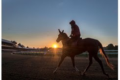 A NEW DAY: As the 2018 season looms, a horse takes to the main track for training at Saratoga Race Course