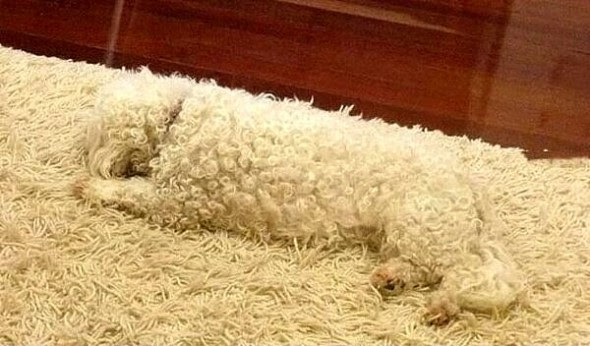 4.26.15 - Pets Who Are Hiding in Plain Sight7