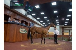 The Constitution filly consigned as Hip 256 in the ring at the OBS June Sale