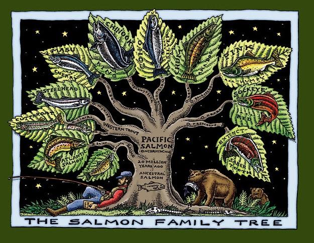 salmon_family_tree.jpg