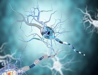 Estriol Promising for Reduction of Multiple Sclerosis Relapse
