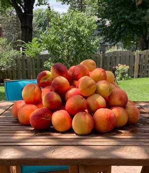 Perfect-Peaches-300