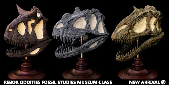 Rebor Oddities Fossil Studies Museum Class Set of 3 Skull Replicas