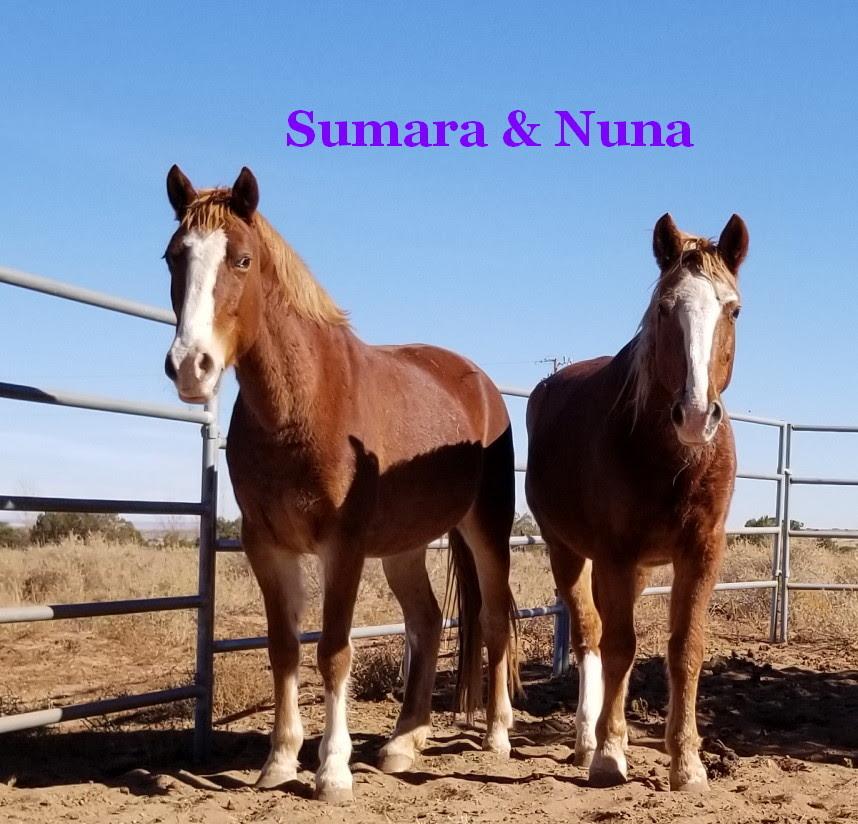 20171125 Nuna Sumara
