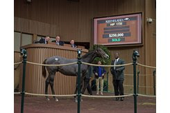 The Connect colt in the ring at the Keeneland November Sale