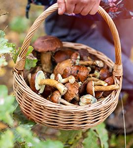 potager d'automne