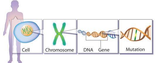 Genetic mutation cartoon