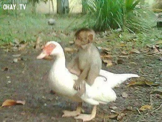 ảnh động vật,suy ngẫm