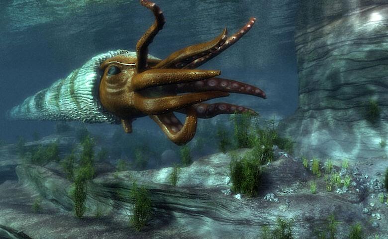 Останки вымершего моллюска-убийцы возрастом 460 миллионов лет случайно обнаружили в Австралии