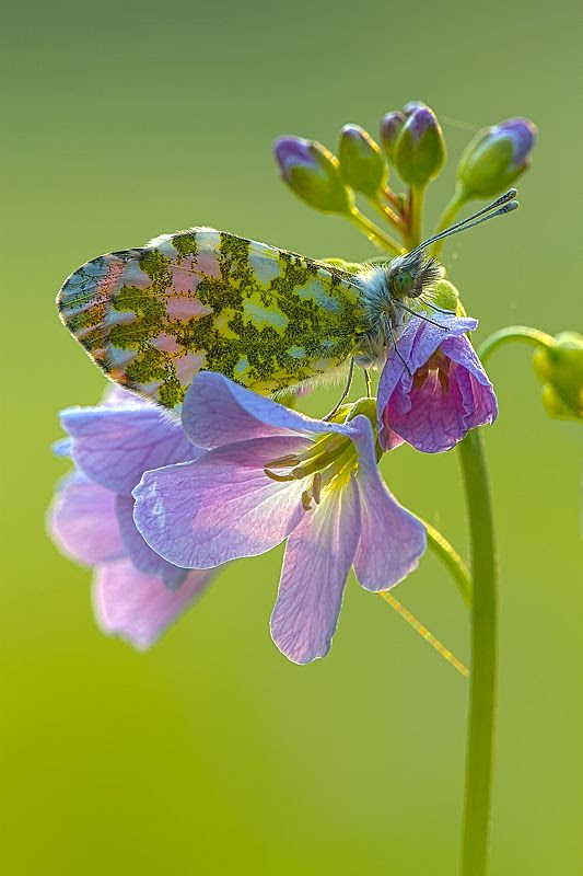 Love Butterflies...: