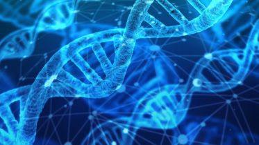 Arks of Genetic Diversity