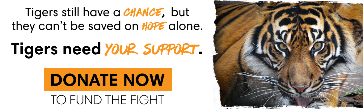 Donate Now on World Tiger Day!