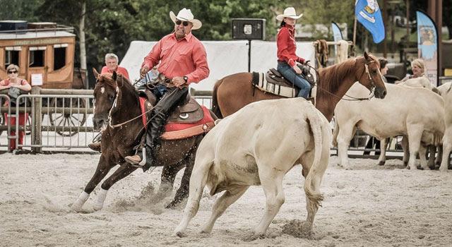 Caen 2016-Equitation western