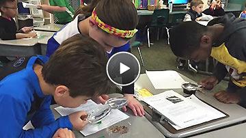Third graders' GBBC video.