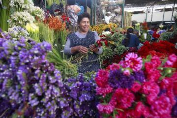Lince abre convocatoria a proveedores de plantas, semillas, abonos, insecticidas y fungicidas