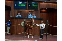 The Kantharos colt consigned as Hip 516 in the ring at the OBS October Yearling Sale