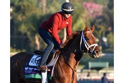 Channel Cat trains at Santa Anita Park ahead of the Breeders' Cup Turf