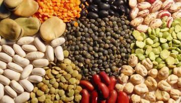 Más de 140 mil familias en Perú se dedican al cultivo de legumbres