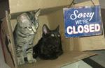 Chats Noir-Deaux Closed