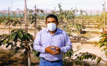 Variedades de cerezas Lapins, Santina y Sweet Heart vienen presentando buenas condiciones para adaptarse a Perú