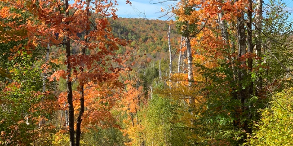 Image of colorful trees at Tettegouche State Park
