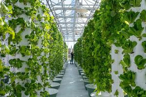 14 greenhouse inside long