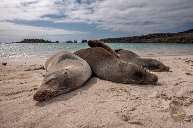 Galapagos Newsletter pic #1.jpg
