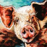 Muddy Pig, 8x8 pastel on card