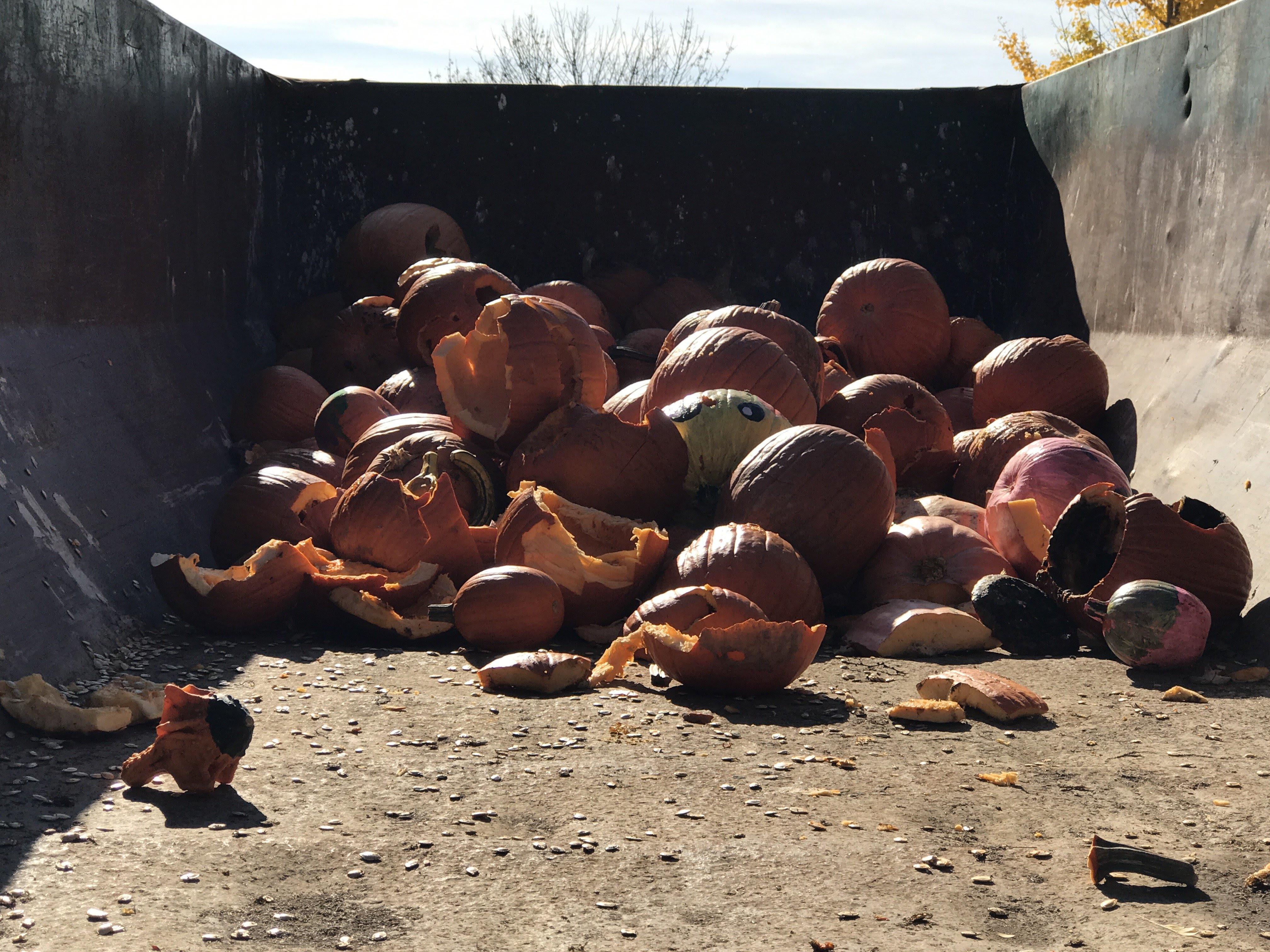 pumpkin composting