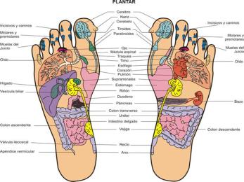 Mapa Zonas Reflejas de los pies