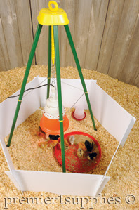 Reuseable brooder helps keeps chicks safe and reduces the exposure to cold drafts.