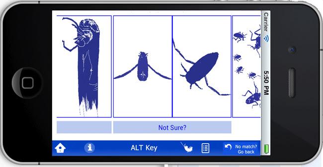 speedbug_silhouette.jpg