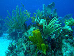 Cuba Jardines de la Reina Reef - A Beacon of Hope in the Caribbean