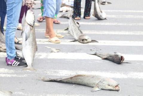 Người dân mang xác cá chết đổ ra quốc lộ, đường đi Vũng Tàu tắc nghẽn - ảnh 6