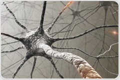 Researchers identify B immune cells that promote axon myelination in developing neurons