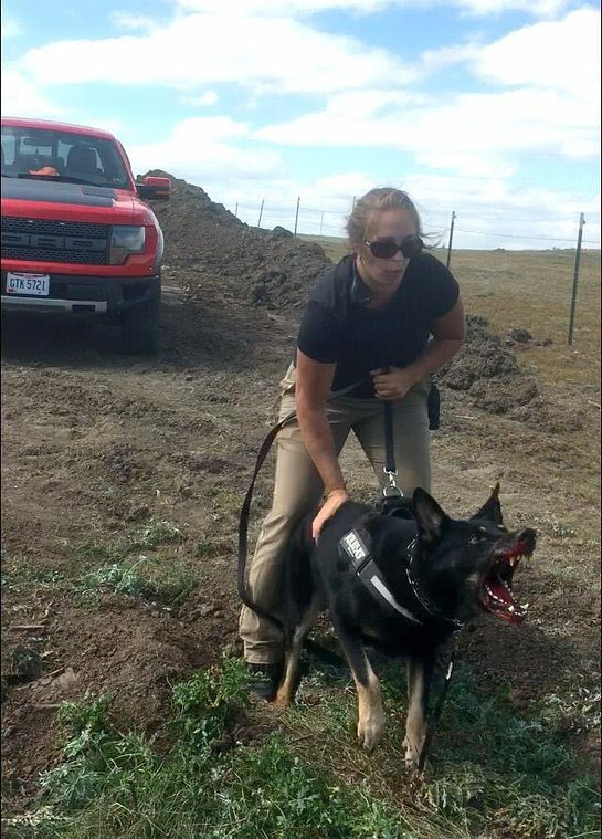 Dogs attacked the water protectors