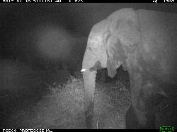 Photo of an elephant captured at night