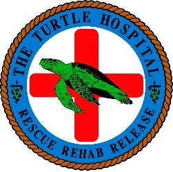 The Turtle Hospital Marathon Job Listings