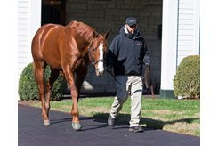 Lord Nelson at Spendthrift Farm