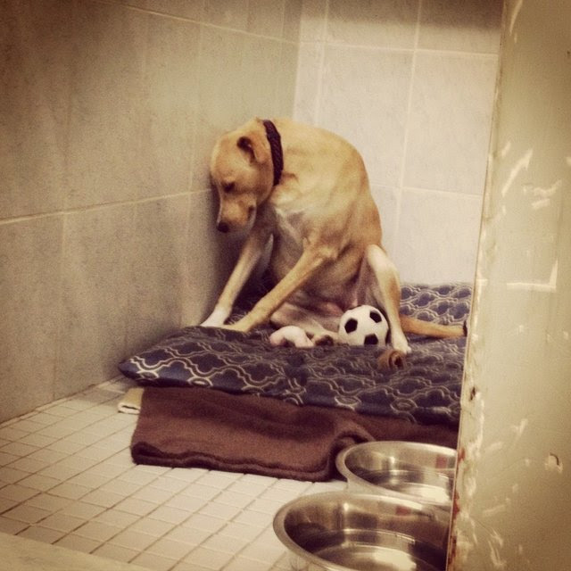 The 'Saddest Dog in the World' Returned to Shelter Again (Video)