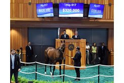 The Twirling Candy filly cosigned as Hip 617 brings $320,000 from Tracy Farmer at the New York-Bred Sale