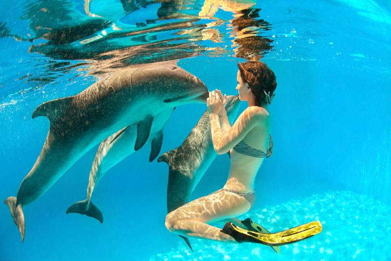 Swimming with the dolphins is something you'll never forget.