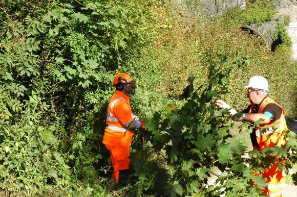 Overgrown trees pose a risk to the railway, damaging equipment, trains and causing delays