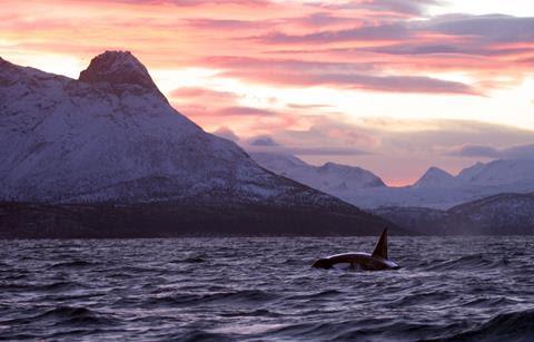 Kolgraf orca 100 Credit: Rob Lott